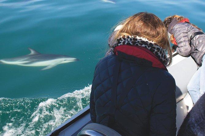 Ocean Wildlife Encounter in Cape Town