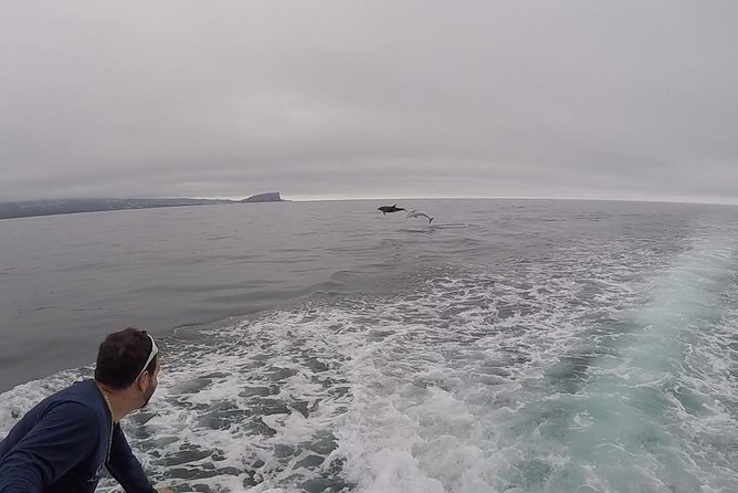 Whale Watching + Sunken Boat Observation / Water4fun