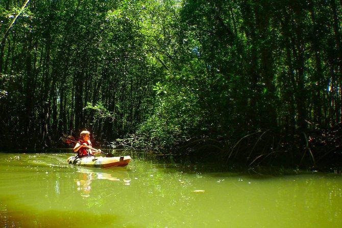 4 Kayak Experiences pay 1 - Mangrove-Bioluminescence-Sunset-Open ocean