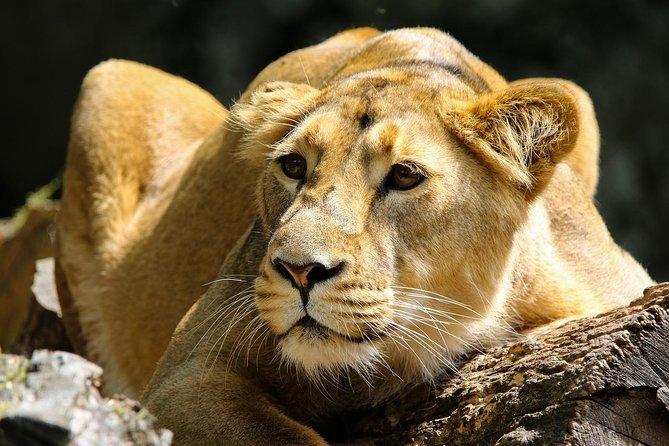 Nairobi Tours 6.a.m To 1.p.m /nairobi National Park/elephant /giraffe Centre