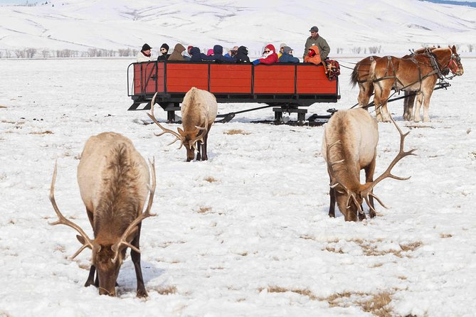Best of Jackson Hole Wildlife Safari Tour