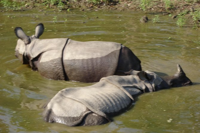 Wildlife Tracking at the Chitwan National Park