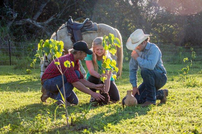 Horseback Planter's Experience