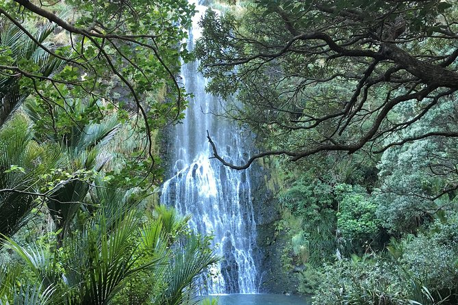 Auckland City and West Coast Tour (private vehicle and guide)