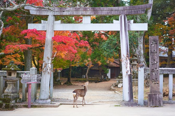 Day trip to ancient Nara from Kyoto photo 2