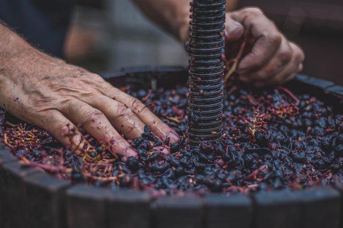 Wine Tasting In Berat