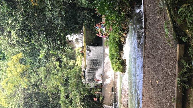 YS Falls, Black River Safari, Floyd's Pelican Bar