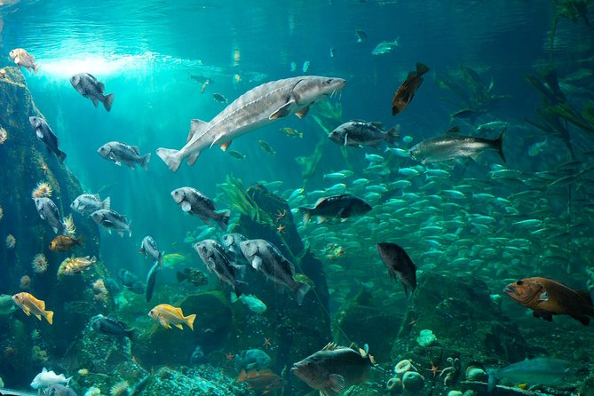 Vancouver Aquarium and Bloedel Conservatory Wildlife Tour Private