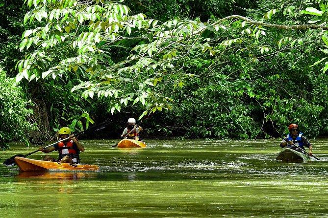 Corcovado River Kayaking And Mangrove Estuary Bird-watching