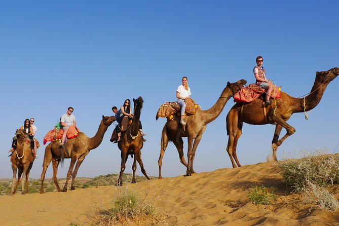 Camel Safari Half Day Tour In Jodhpur