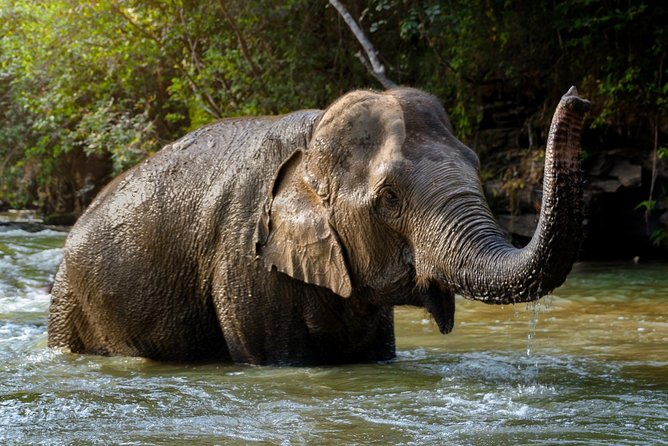 Half Day Visit Elephant Sanctuary in Samui