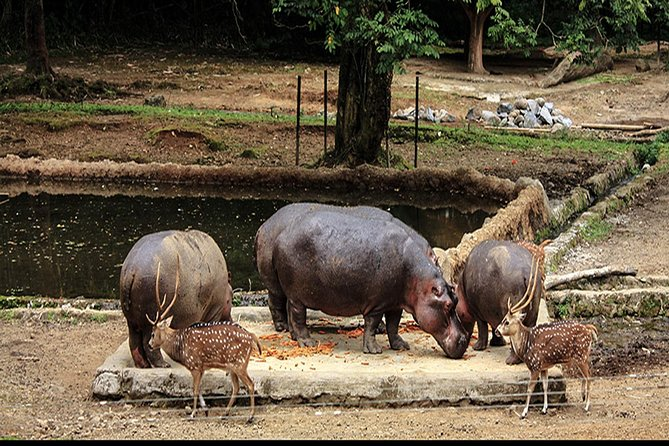 One Day Tour – Taman Safari Bogor West Java