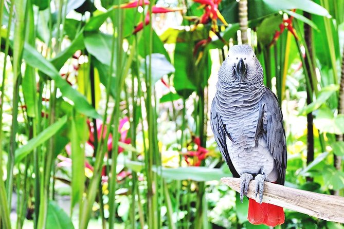 Ancient Temples, Ubud and Bird Park
