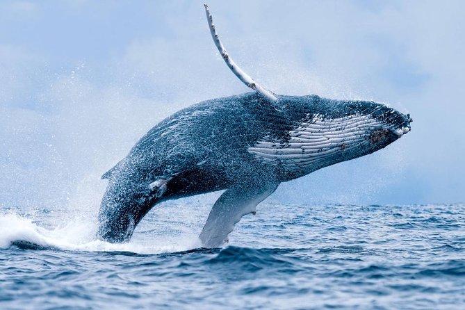 Hermanus Whale Watching and Wine Tasting Tour