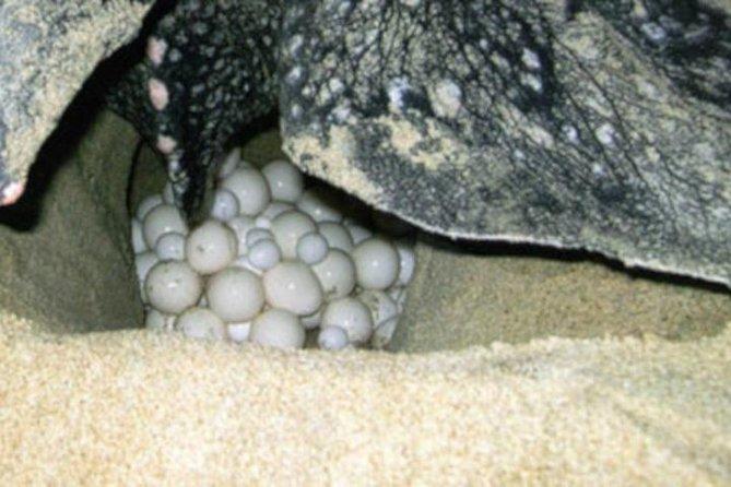 Night Turtle Nesting Tour from Tamarindo