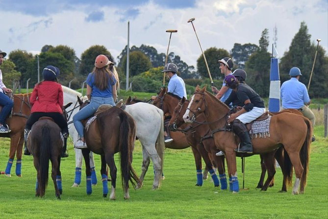 The Polo Experience