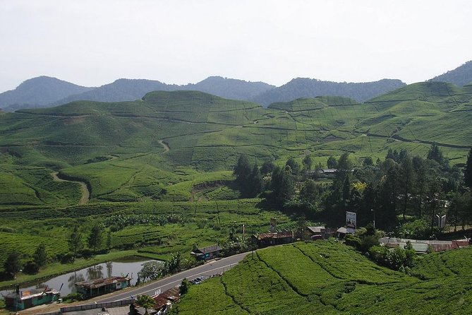 Agrotourism Gunung Mas Tea Plantation, Puncak West Java