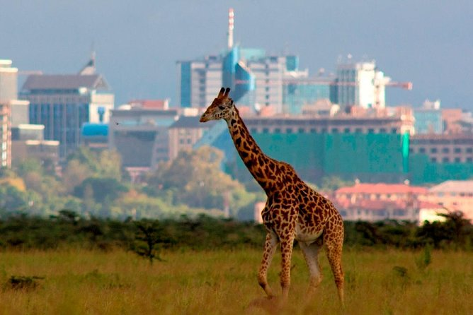Nairobi National Park,Baby elephant,Giraffe Center & Karen Blixen