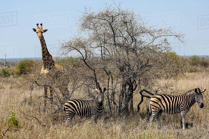 3 Days/2 Nights package Tour -Kruger National Park