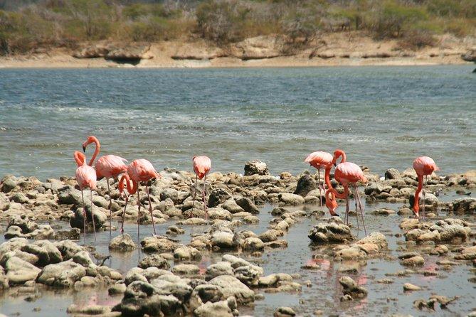 Flamingo & Mangrove Trip with Local Guide