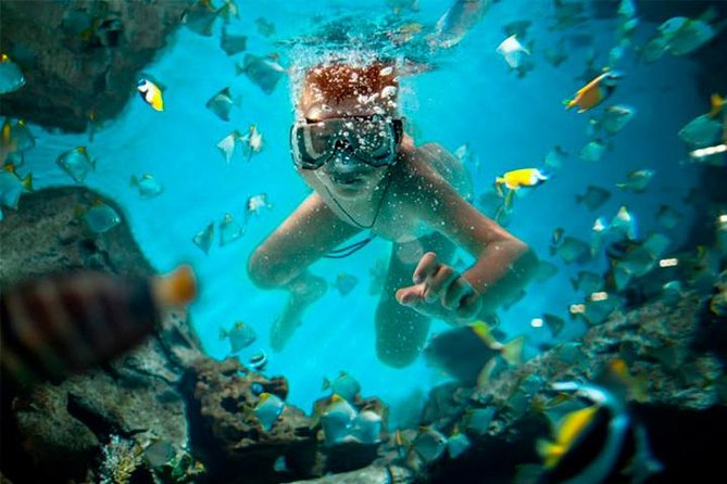 Explore and Enjoy the Caribbean Sea in Cancun (Swim and Ride) photo 2