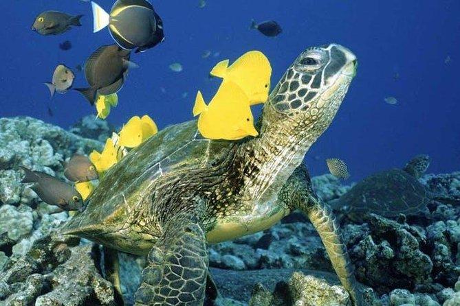Waikiki Turtle Snorkel Adventure with Manakai Catamaran