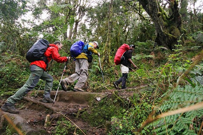 Mount Kilimanjaro Day Hike photo 8