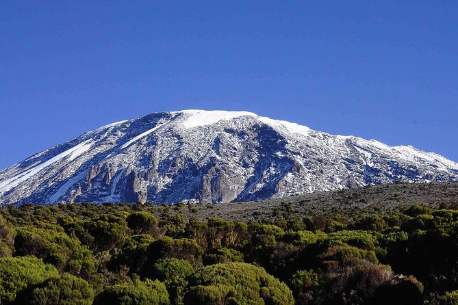 Mount Kilimanjaro Day Hike photo 7