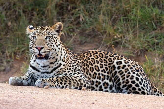 Bwindi impenetrable Kenya Tanzania Gorilla Safari 14 days 13 nights