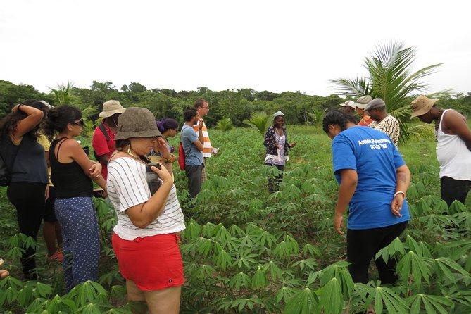 Garifuna Cassava Farm Tour