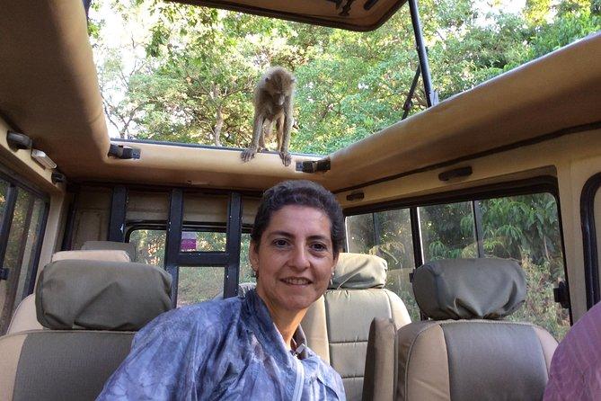 Day Trip - Tarangire National Park