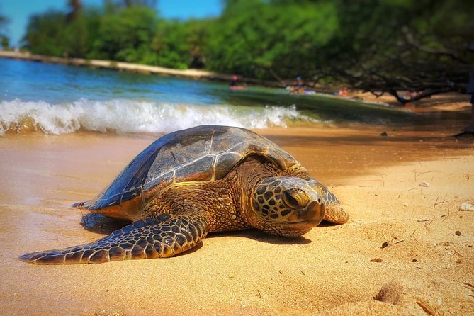 Private Northshore Tour For 1-4 people