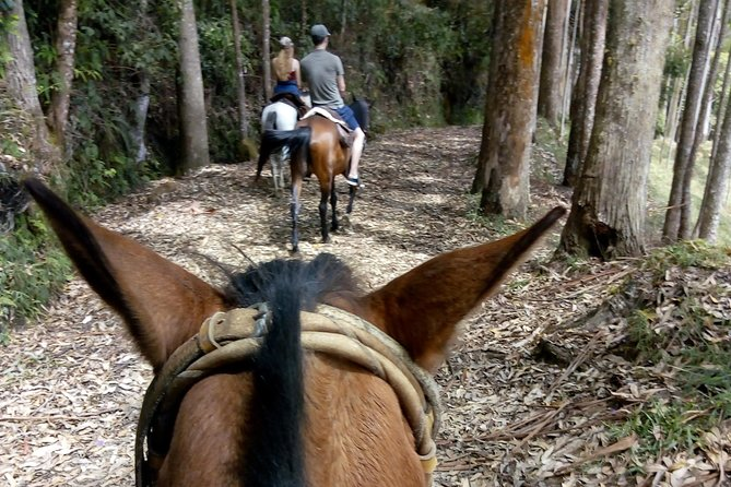 Horse-riding in the picturesque mountains of Jericó