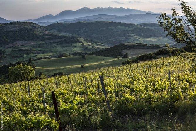 Vineyard Tours Follwed by Wine Tastings