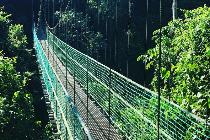 Roatan Shore Excursion: Hanging Bridges Eco Tour and Beach Break