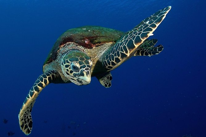 Tahiti Turtles snorkeling at 7:30am