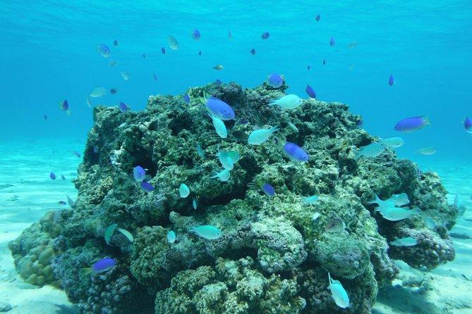Tahiti wrecks and tropical fishes snorkeling at 10:30am