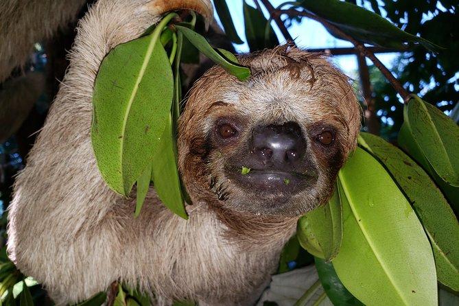 Roatan Shore Excursion: Monkeys & Sloths Park Encounter