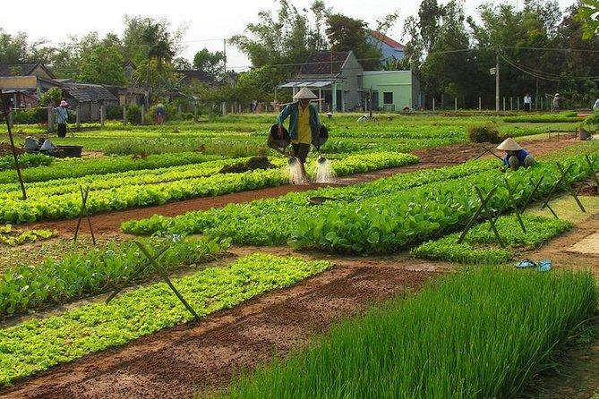 Tra Que Vegetable Village Group Tour