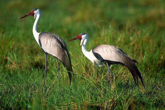 Birding Day Trips from Addis Ababa