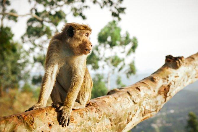 Arugam Bay Green Tours Safari