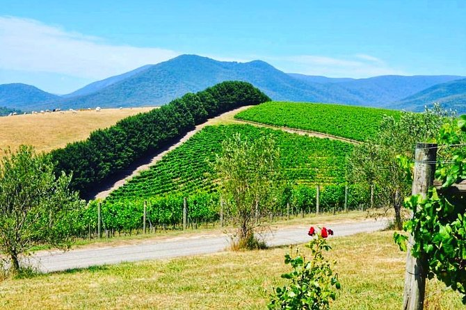 Private Winery Tour: Yarra Valley Boutique Wine Trails From Melbourne