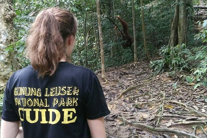Natural ape tours in indonesia