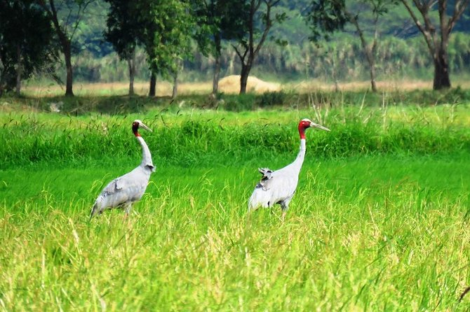 Myanmar Bird Watching Tour to Ayeyarwaddy Region ( 1 N 2 D )