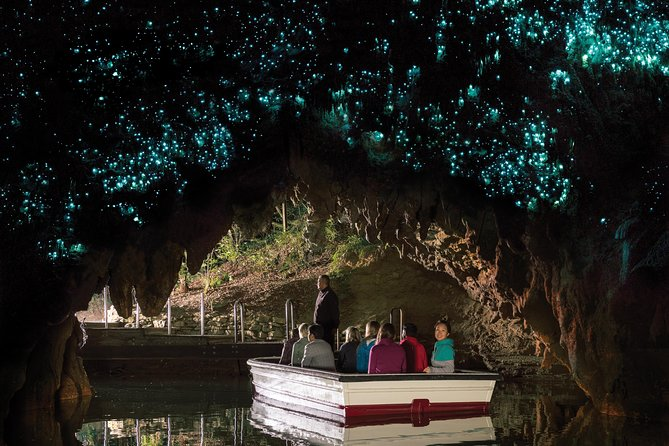 Waitomo Caves and Kiwi House (private vehicle and driver)
