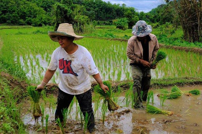 Community - Based Tourism at Huay Khom Village, Chiang Rai