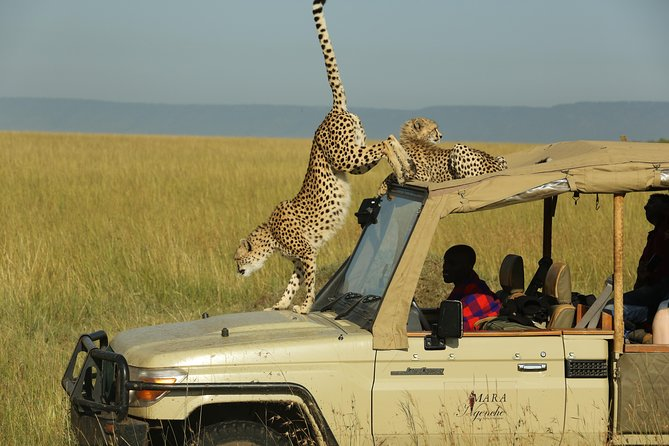 6-Day The Classics of Kenya Adventures