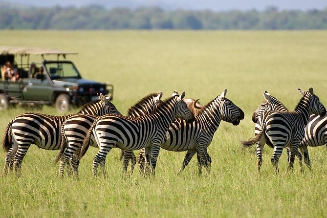 3days Maasai Mara Safari Joining a group