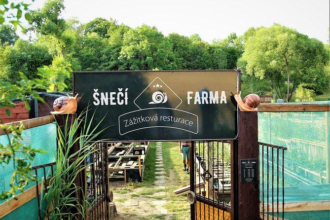 Gastrotour: snail's farm with degustation