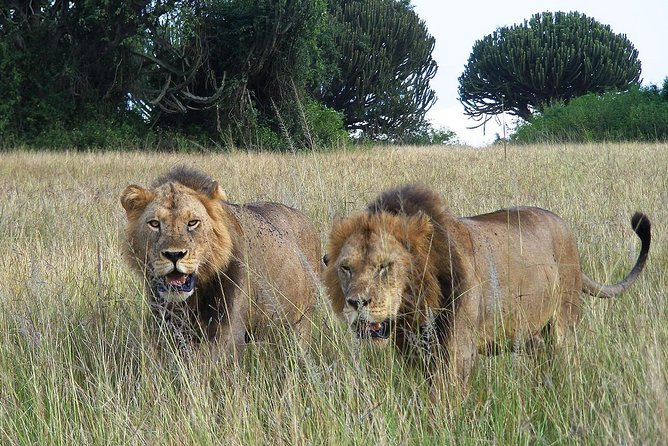 2 Days Big 5 & Big cats in Akagera National Park photo 8